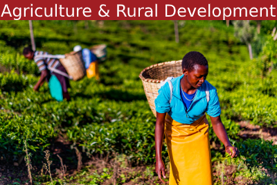 Agriculture and Agribusiness Development Courses