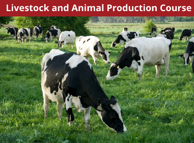 Livestock and Animal Production Course